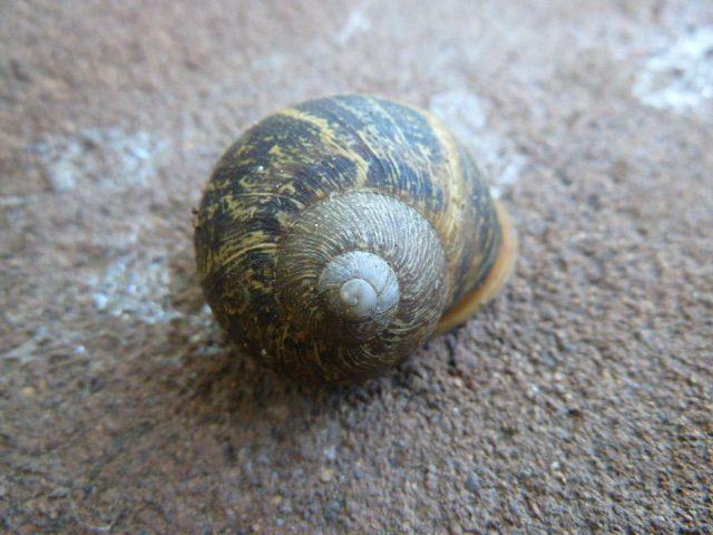 La perfeccción de un caracol