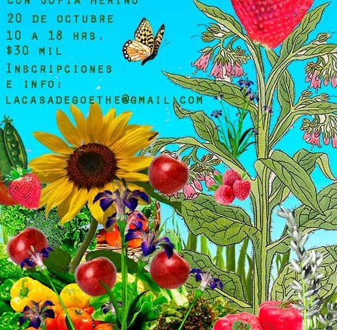 mi-jardin-comestible