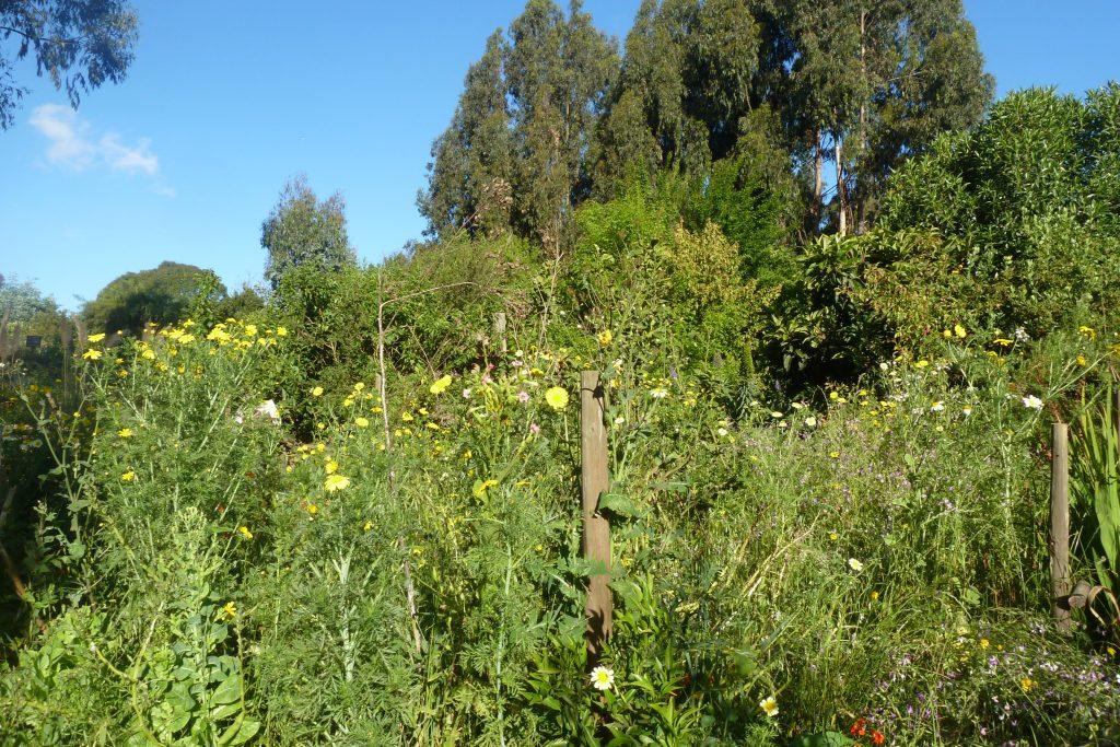 flores silvestres en la huerta