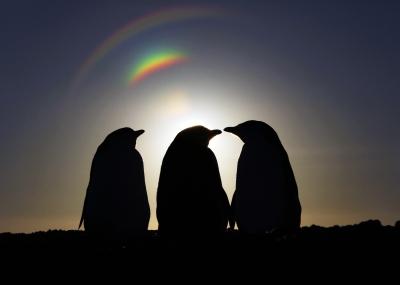solsticio-de-invierno-en-magallanes